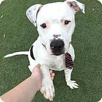 Adopt A Pet :: Miller - Loxahatchee, FL