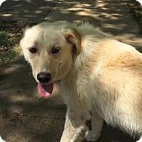 Adopt A Pet :: Haze - Washington, DC