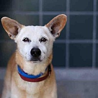 Adopt A Pet :: SHANE - Rancho Cucamonga, CA
