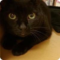 Adopt A Pet :: Winnie - Jackson, NJ