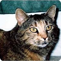 Adopt A Pet :: Megs - Medway, MA