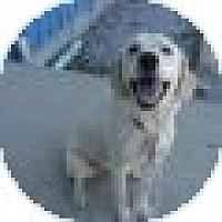 Adopt A Pet :: Leeta - Denver, CO