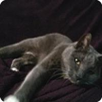 Adopt A Pet :: Edward S - Vancouver, BC