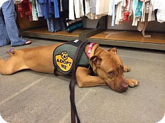 Hound (Unknown Type) Mix Dog for adoption in Newfield, New Jersey - Treena