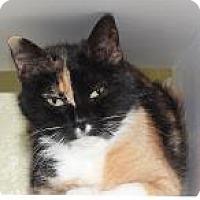 Adopt A Pet :: Kal Kal - Venice, FL