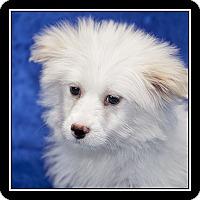 Adopt A Pet :: Tay - San Diego, CA
