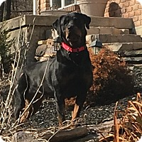 Adopt A Pet :: Windy - Frederick, PA