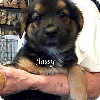 Adopt A Pet :: Jassy - Kansas City, MO