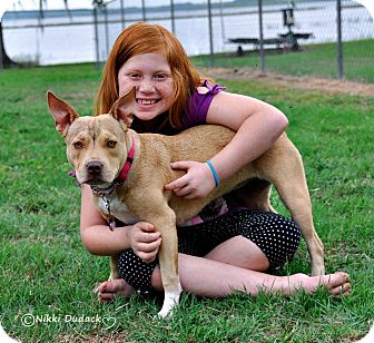 American Pit Bull Terrier Dog for adoption in Orlando, Florida - Sweet Pea