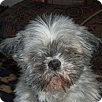 Adopt A Pet :: Kimmie - Denver, CO