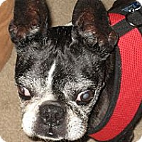 Adopt A Pet :: Maxie - Temecula, CA