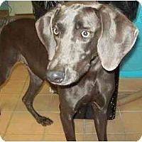 Adopt A Pet :: Luna - Eustis, FL