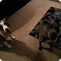 Adopt A Pet :: Bruno - WARREN, OH