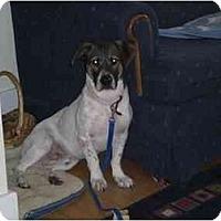 Adopt A Pet :: Buddy - Waukesha, WI
