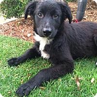 Adopt A Pet :: SPARKY - Irvine, CA
