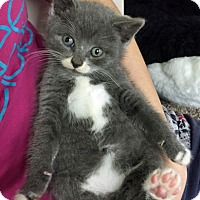 Adopt A Pet :: Misty - Riverhead, NY