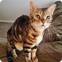 Adopt A Pet :: Racket - Davis, CA