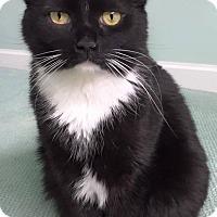 Adopt A Pet :: TUX - Muskegon, MI