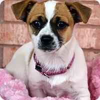 Adopt A Pet :: Everyst-Adoption pending - Bridgeton, MO