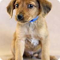 Adopt A Pet :: Chucky - Waldorf, MD