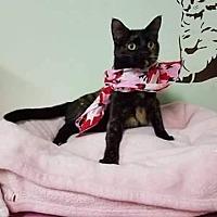Adopt A Pet :: Selena - Lyons, IL