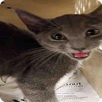 Adopt A Pet :: *APPLE - Bakersfield, CA