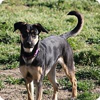 Adopt A Pet :: Duchess - Hayes, VA
