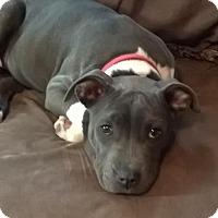 Adopt A Pet :: Aloha-PENDING - Grafton, WI