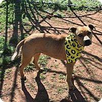 Adopt A Pet :: Ella - North Brunswick, NJ