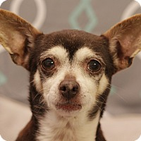 Adopt A Pet :: Winnie - Romeoville, IL