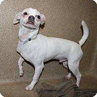 Adopt A Pet :: 24496 - Yetti - Ellicott City, MD