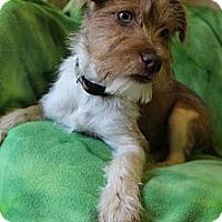Adopt A Pet :: Razzle - Wytheville, VA