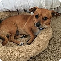 Adopt A Pet :: Arnold - Santa Monica, CA