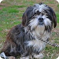 Adopt A Pet :: Mitzy - Athens, GA