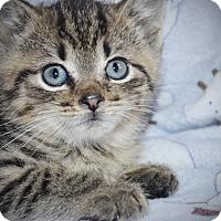 Adopt A Pet :: Nick - Xenia, OH