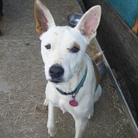 Adopt A Pet :: Tia - Mansfield, TX