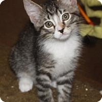 Adopt A Pet :: Dippy - North Highlands, CA