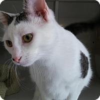 Adopt A Pet :: Emery - La Grange Park, IL