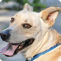 Adopt A Pet :: Buddy - Ormond Beach, FL