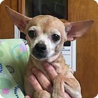 Adopt A Pet :: Hazel (Prancer) - Orlando, FL
