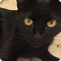 Adopt A Pet :: Mia - Merrifield, VA