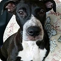 Adopt A Pet :: Tapioca - Gainesville, FL