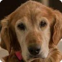Adopt A Pet :: Alice - Denver, CO