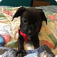 Adopt A Pet :: Chancla - Washington, DC