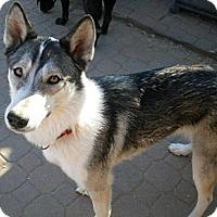 Adopt A Pet :: Keshia - Gilbert, AZ