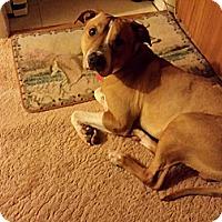Adopt A Pet :: Geno - Elderton, PA