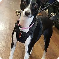 Adopt A Pet :: Bebe - Arlington, TN