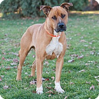 Adopt A Pet :: Hercules - Washoe Valley, NV