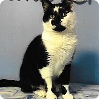 Adopt A Pet :: Quinn - Medway, MA