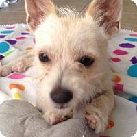 Adopt A Pet :: Metta - Seattle, WA